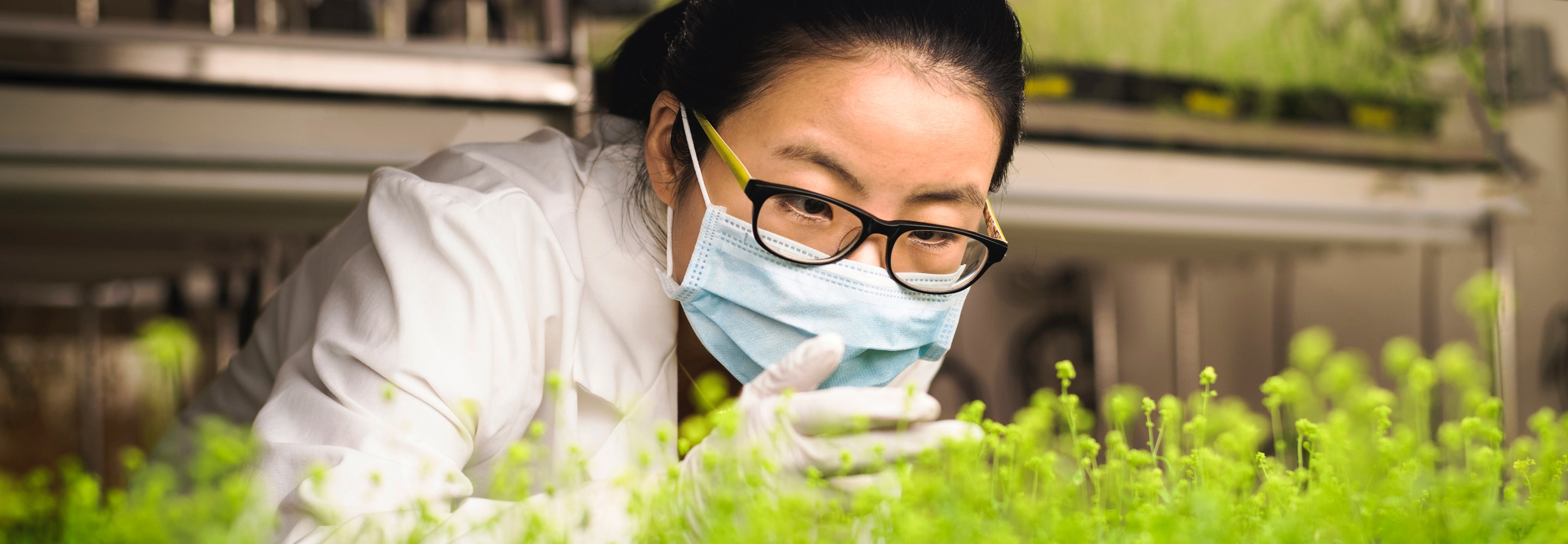 Scientist examining plants in laboratory